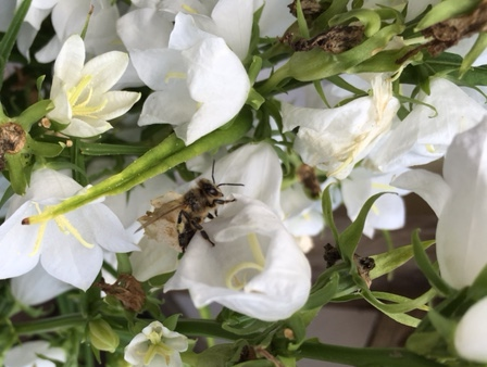 Bienen Bienensterben Honig Blüte Bloggeburtstag German Abendbrot